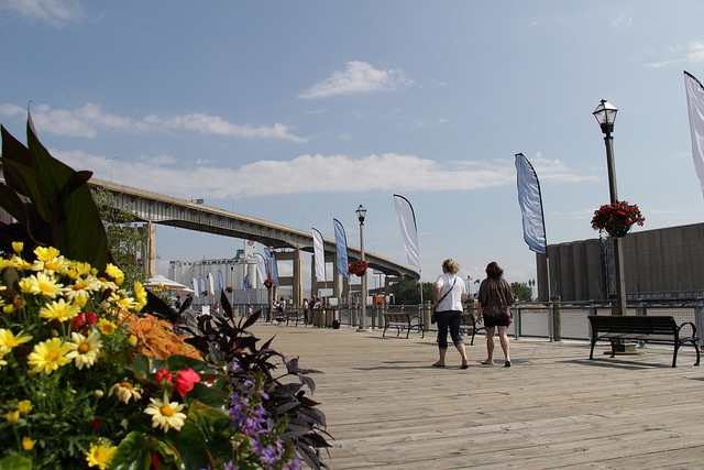 Canalside in the summer