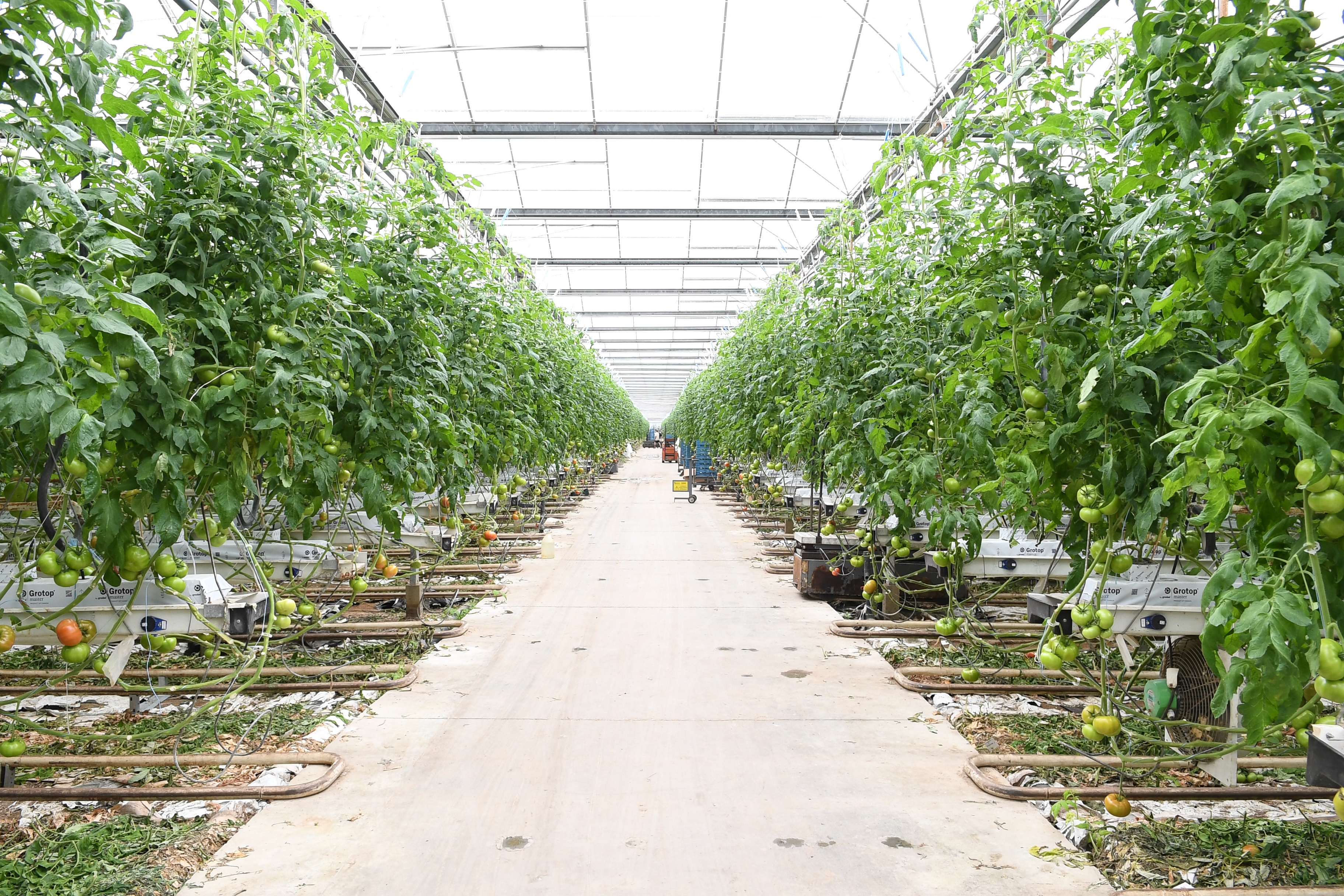 Intergrow Greenhouse in Allegany County.